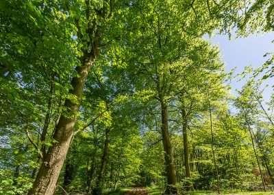 Fring Forestry in Norfolk